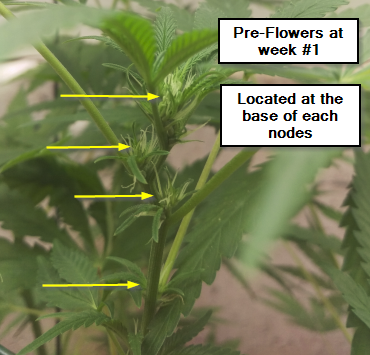Pre-Flowers within nodes